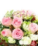 Rosas cor-de-rosa sobre o fundo branco Foto de Stock