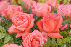 Rosas cor-de-rosa velhas no fundo verde Fotos de Stock Royalty Free