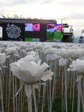 10.000 rosas Cordova Cebú Fotografía de archivo libre de regalías