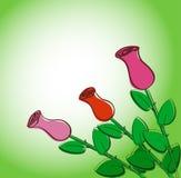 Rosas criativas Foto de Stock Royalty Free