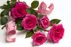Rosas da beleza Imagens de Stock Royalty Free