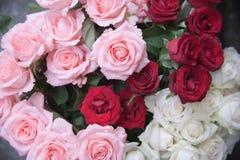 Rosas da cor Imagem de Stock