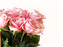 Rosas da cor-de-rosa do dia do Valentim fotografia de stock