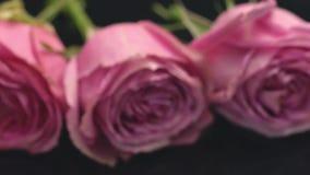 Rosas da cor cor-de-rosa em um fundo escuro o cheiro do frescor da surpresa do presente do ramalhete dos perfumes filme