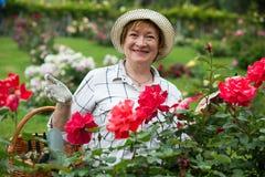 Rosas da mulher do aposentado foto de stock royalty free