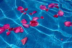 Rosas da pétala Fotografia de Stock Royalty Free