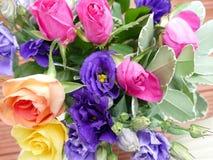 Rosas de brotamento bonitas do coulorfull Fotos de Stock Royalty Free