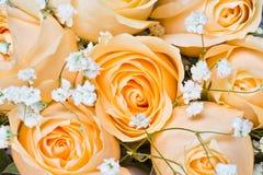Rosas de Champagne com paniculata do gypsophila imagens de stock