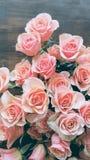Rosas de color salmón Foto de archivo libre de regalías