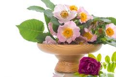 Rosas de florescência bonitas e um cartão para a mãe Fotos de Stock