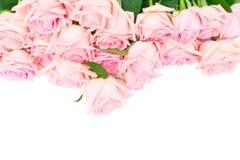 Rosas de florescência cor-de-rosa Imagem de Stock