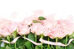 Rosas de florescência cor-de-rosa Fotografia de Stock Royalty Free