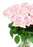 Rosas de florescência cor-de-rosa Fotos de Stock Royalty Free