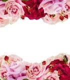 Rosas de florescência cor-de-rosa Imagens de Stock Royalty Free