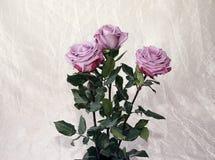Rosas de gris, lila, varietal imagen de archivo