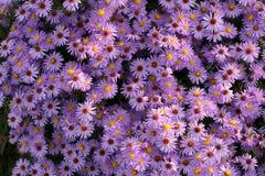 Rosas de invierno Fotos de archivo