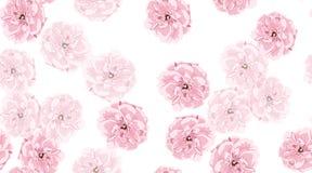 Rosas de la acuarela, modelo inconsútil floral foto de archivo libre de regalías