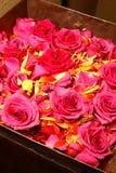 Rosas de la boda Foto de archivo libre de regalías