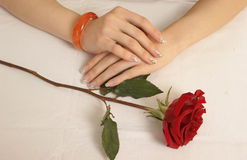 Rosas de la mano imagen de archivo libre de regalías