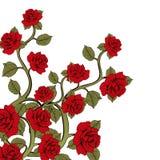 Rosas de la rama de la flor, ramo de flores Ornamento con las rosas rojas Fotos de archivo libres de regalías