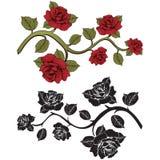Rosas de la rama de la flor Sistema de ramas rojas y negras Impresión floral Fotografía de archivo