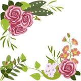 Rosas de la tarjeta de felicitación Fotos de archivo
