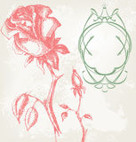 Rosas de la vendimia Imágenes de archivo libres de regalías