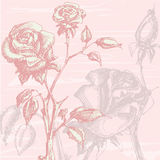 Rosas de la vendimia Fotografía de archivo
