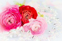 Rosas de los ranúnculos en la guirnalda cristalina Imagen de archivo libre de regalías