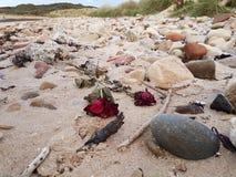 Rosas de muerte Foto de archivo libre de regalías