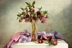 Rosas de Natal fotografia de stock royalty free