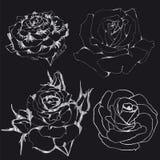 Rosas de plata de los contornos en un fondo negro Imagen de archivo