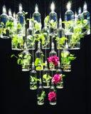 Rosas de suspensão Imagens de Stock Royalty Free