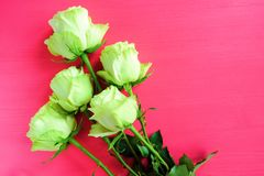Rosas de té verde en un fondo rosado brillante fotografía de archivo