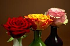 Rosas de Thre Imagen de archivo