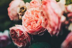 Rosas de Tumblr Imágenes de archivo libres de regalías