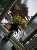 Rosas debido a la nieve del invierno foto de archivo