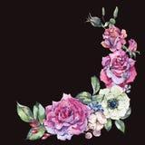 Rosas decorativas del rosa de la acuarela del vintage, guirnalda floral de la naturaleza stock de ilustración