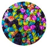 Rosas 2 del arco iris fotografía de archivo libre de regalías