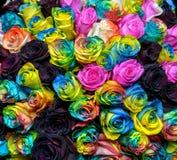 Rosas del arco iris fotos de archivo libres de regalías