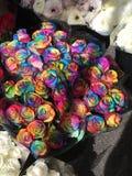 Rosas del arco iris Fotografía de archivo