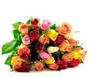 Rosas del arco iris del manojo planas en el fondo blanco Imagen de archivo