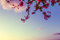 Rosas del cielo Imagen de archivo libre de regalías