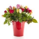 Rosas del ramo en cubo Foto de archivo
