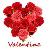 Rosas del rojo de la tarjeta del día de San Valentín Foto de archivo libre de regalías