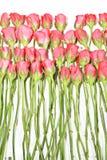 Rosas del romance Imagen de archivo libre de regalías