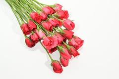 Rosas del romance Foto de archivo