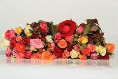 Rosas del romance Fotografía de archivo