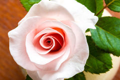 Rosas del rosa de la visión superior Imágenes de archivo libres de regalías