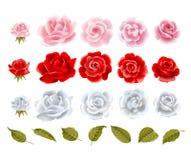 Rosas del vector stock de ilustración